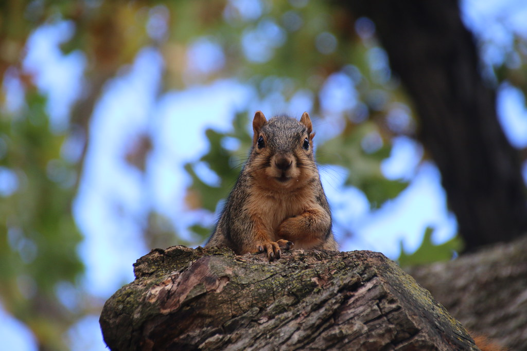 135/365/3057 (October 24, 2016) - Squirrels in Ann Arbor at the University of Michigan (October 24, 2016)