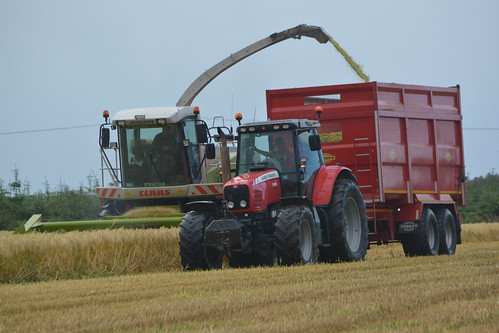 Claas Jaguar 870 SPFH filling a Thorpe Trailer drawn by a Massey Ferguson 6495 Tractor