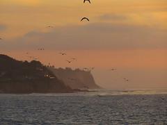 Flocking to the Cliffs