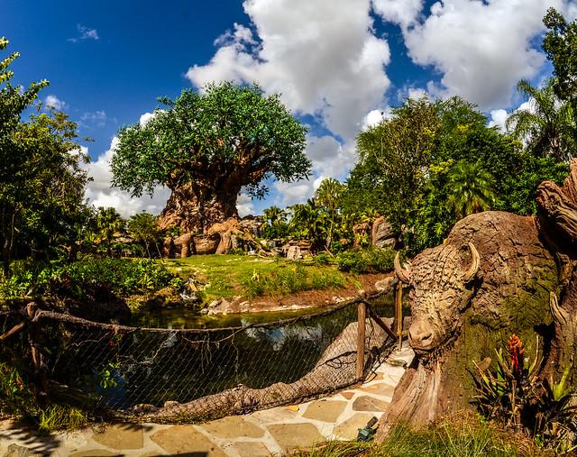 Tree of Life buffalo AK