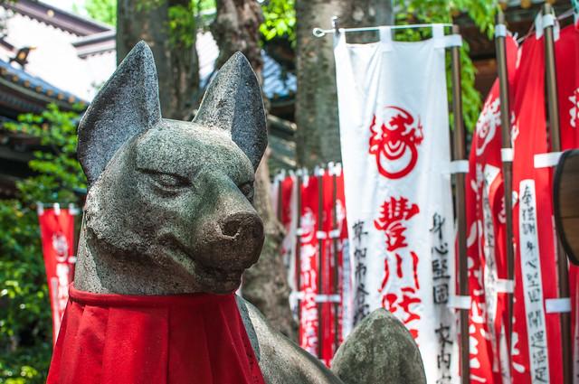 Zorros del Templo Toyokawa Inari