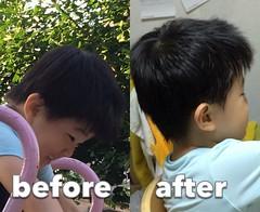 とらちゃん散髪 before after 2014/6/19