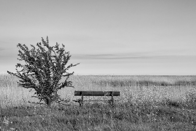 The Lone Bench