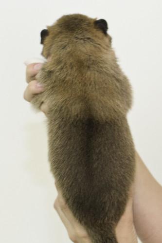 Anya-Litter1-10Days-Puppy3(Male)b