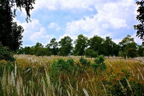 fields of Lumbini