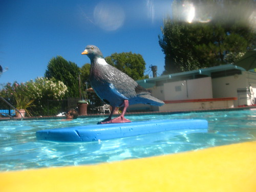 Pigeon Afloat