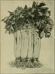 """Image from page 38 of """"Fruits, vegetables and flowers, a non-technical manual for their culture"""" (1918)"""