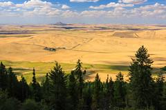 Steptoe from Kamiak Butte