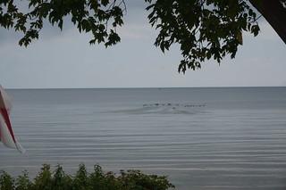 Waterfowl on Lake Erie