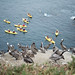 Pelicans and Kayakers by christopher.berry