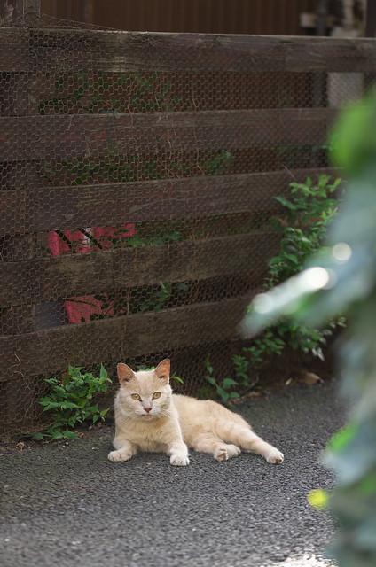 東京路地裏散歩 南池袋のネコ 2014年8月15日