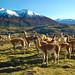 EcoCamp Patagonia Wildlife Safari