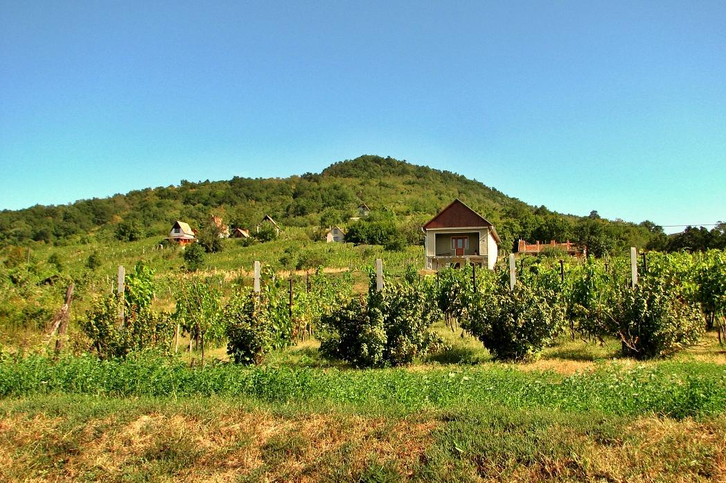 Viničný vrch vo Vinici