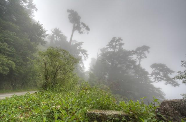 雲霧鐵杉 HDR 1 合成