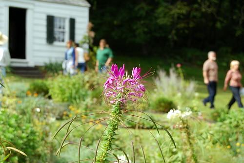 WPIR - Fosterfields garden-001