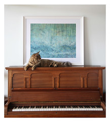 Raining Cats and Thula on the piano