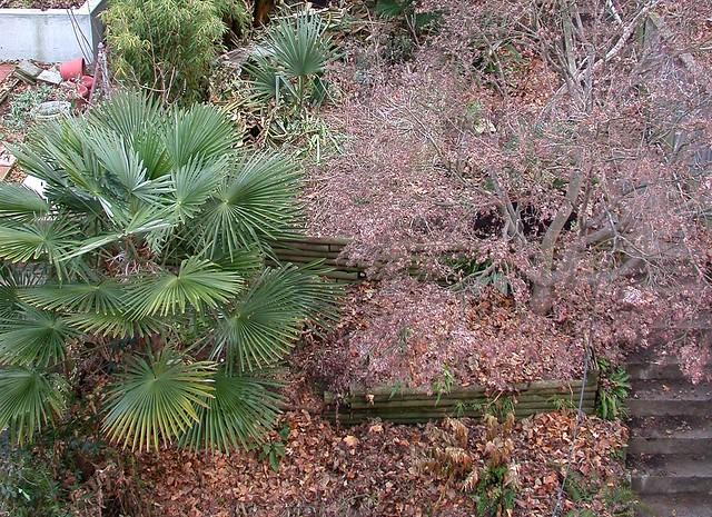 Garden, early December 2013
