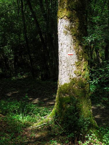 Camino Via Tolosana 582.jpg