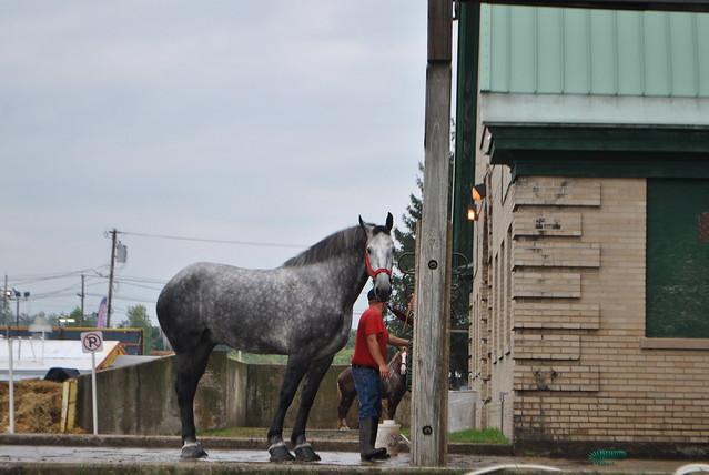 NYSFair2014_Horse