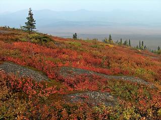 Fall at the Arctic Circle and Wildfire Smoke