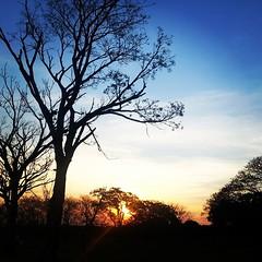 Pôr do sol fechando o domingo no Parque da Cidade. #100happydays #day33