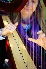 string instrument, clãrsach, music, harp, string instrument,