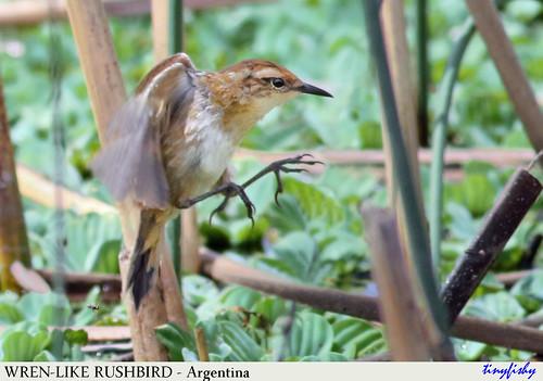 Autor: tinyfishys World Birds-In-Flight