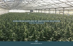 """Medropharm M-1337 - Swiss Cannabis Project"