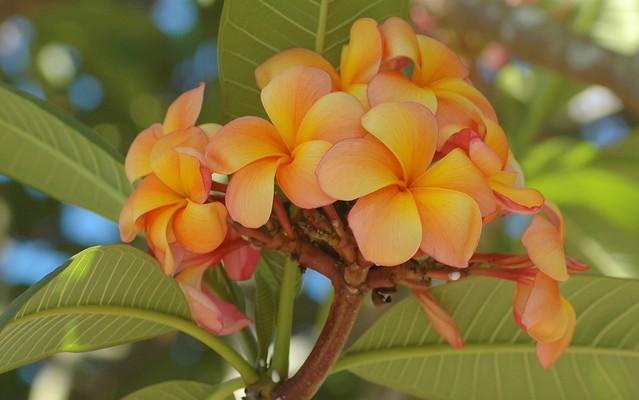 Colours of Summer, Nikon D70, Tamron SP AF 90mm f/2.8 [Di] Macro 1:1 (172E/272E)