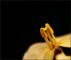 new flor