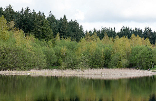 Green across the lake.