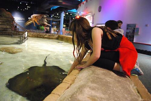 aquarium - sting ray touch tank