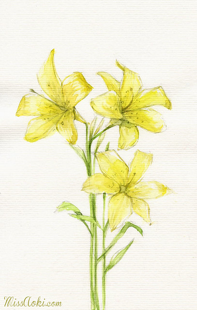 Sketches: Lirio amarillo // Yellow iris
