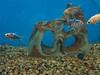 tropical-fish-coral-custom-tank-aquarium-sarasota-fl-10