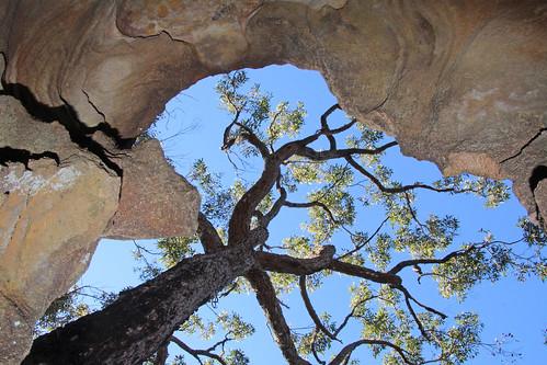 Rock tree and sky