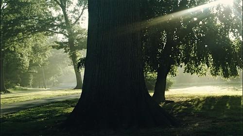 trees sun nature leaves sunrise nokia shadows parks sunrays lumia jrhonj lumia1020