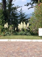Lago Maggiore 2014