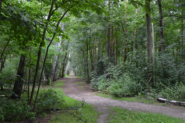 Grunewald Berlin_ forest path