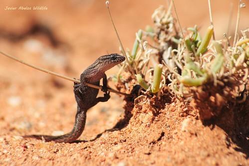 fauna en africa oriental