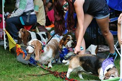 2014 Woodinville Festival and Basset Bash