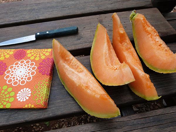tranches de melon