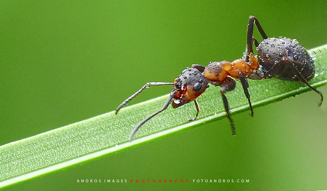Ant aphid interactions essay