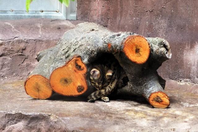 Sleeping Like a Log