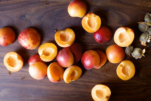 apricots everywhere this summer