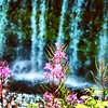 Flowers at Upper Tahquamenon Falls #waterfall #flower
