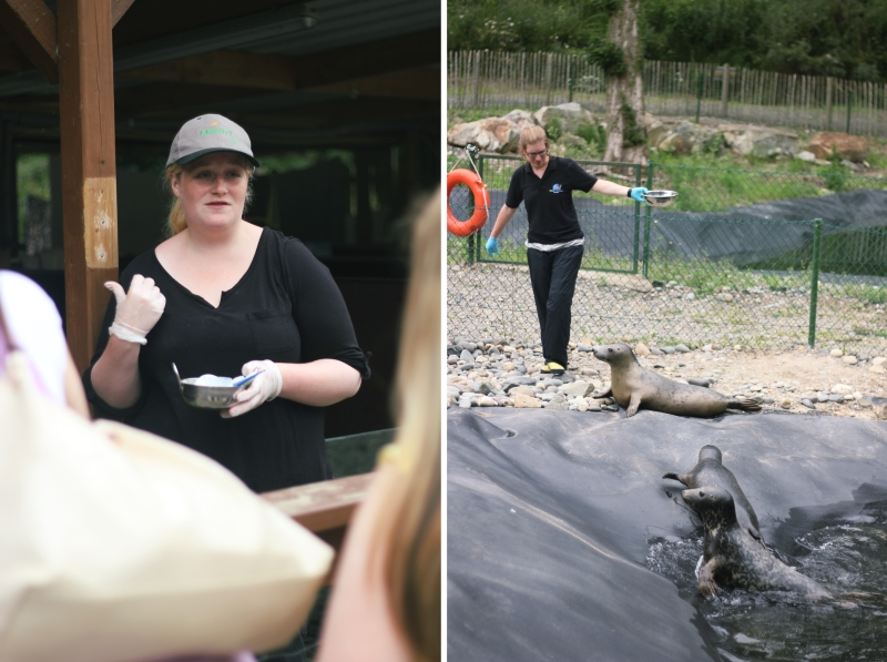 seal rescue centre volunteers