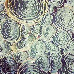 Succulents! #Calinatives