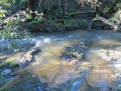 2014-08-10 Lilydale Falls 106 - Pool above upper falls