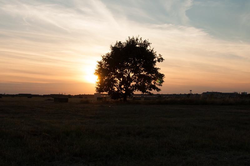 The tree on THF