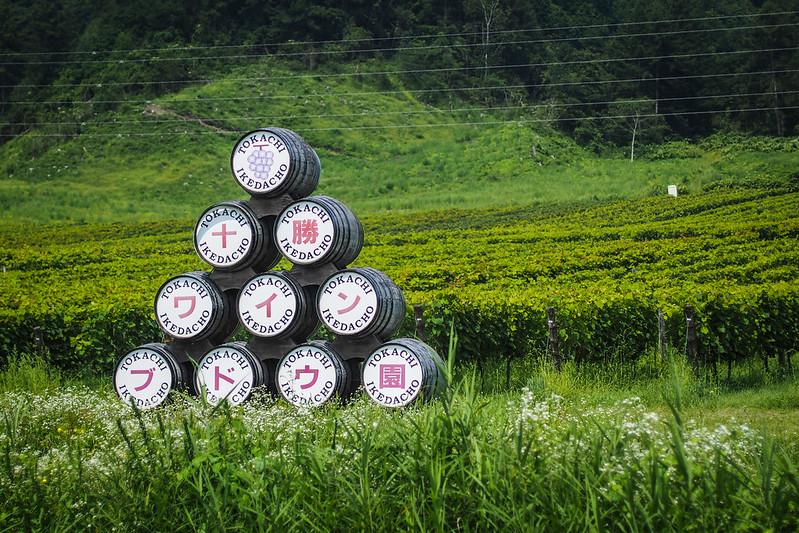 Tokachi is a big wine-producing region of Hokkaido (near Ikeda, Hokkaido, Japan)